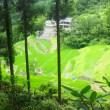 泉谷の棚田/2017年夏(緑の中)