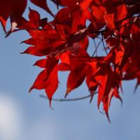 琵琶湖のあたりで紅葉を見てきました。ニコンD750で撮影。