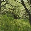 清々しいズミの森