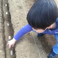 ジャガイモの植え付けをしました