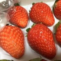 ふるさと納税:苺