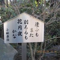 深大寺2:句碑・歌碑を巡る