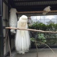 平川動物公園の鳥さん~鹿児島旅行13