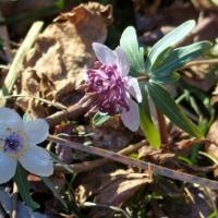 花の季節がやってきた 星野 2017.3.4