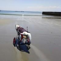 海に行ったよ!