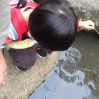 池の鯉を釣る!?