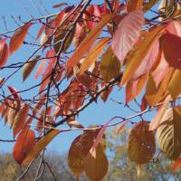 紅葉を見たくて大阪城公園へ (2016.11.26)
