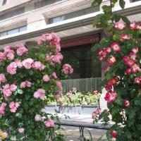 日本大通の花壇