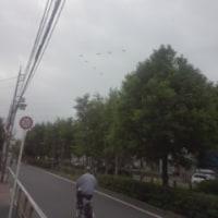 V字編隊(UH-1J)…