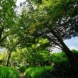 真夏の日比谷公園(超広角10ミリレンズで撮影)