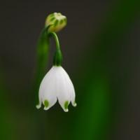 庭に咲く白い花