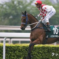 スプリンターズSに登録した香港馬2頭。エアロヴェロシティは今年は出走せず