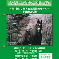【2017 JRAブリーズアップセール】の「台付価格&馬体重」が発表!