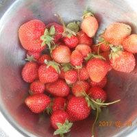 今日の収穫 イチゴ ダイコン カブ キュウリ イチゴはいよいよおしまい