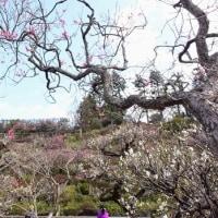2017池上の梅と本門寺