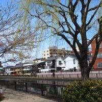 新川のお花見