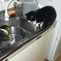 ネコも家族の一員