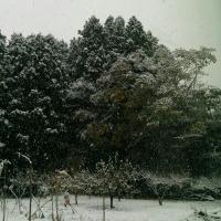 雪だぁ~。