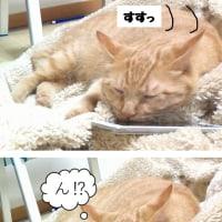 枕の硬さ(猫写真漫画)