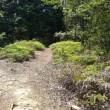 白木山の脇道