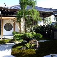 センリョウ、マンリョウ と お寺の庭園