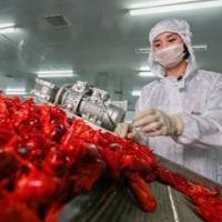 中国軍は急増する需要に対応してザリガニの生産に乗り出す