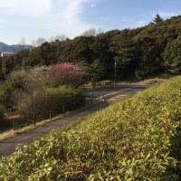 平田木佐本陣記念館