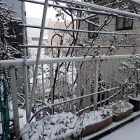 平成29年1月15日(日) 寒波の中で♪