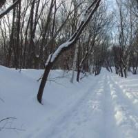 宮丘公園 雪多し