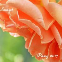 薔薇の園  * 2017 *  Vol.11 * ロイヤルサンセット *