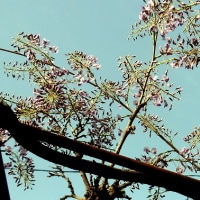 フジツボミ タマバエの被害