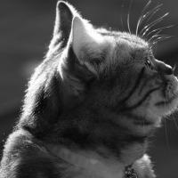 家の猫〜XC50-230mmF4.5-6.7 OIS