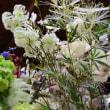 造花満載 横浜ショウルーム ココーフラワー