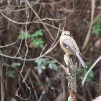 野鳥観察(庄内緑地公園)