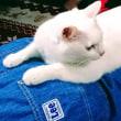 7月17日(月)のつぶやき 白猫ミルコ 飯伏幸太 内藤哲也 新日本プロレス G1 CLIMAX 27 開幕戦 北海道 #g127