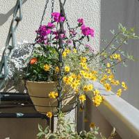 5月21日(日)花盛りやん♪