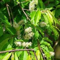 4月末の木の花とキボシアシナガバチの巣作り