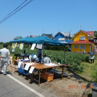 街おこし! そら豆収穫。千葉県いすみ市で