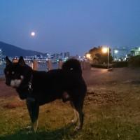 今朝の満月
