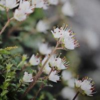 170331_木下沢-1 <花猫の目-1>