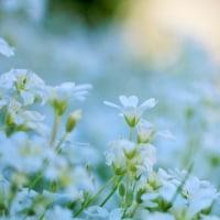 庭咲きの花