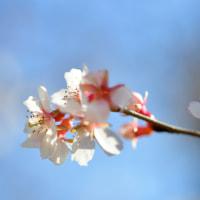 冬と春との間