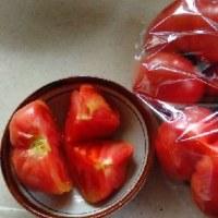 頂いたトマト