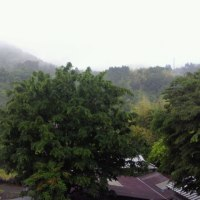 雨の一日となりました。