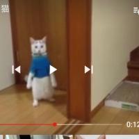 ブルーが重すぎる猫♪