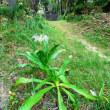 〈催事〉0512: ハマユウの花と「法華塔」