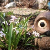 つれづれなるままに   2444  春一番 花の庭