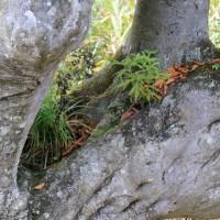 木の中の木