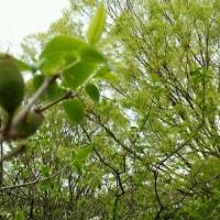 春を感じる代々木公園