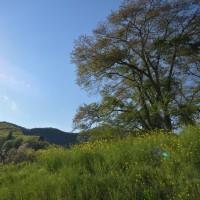 新緑の山里へ